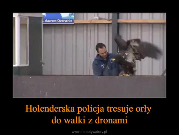 Holenderska policja tresuje orły do walki z dronami –