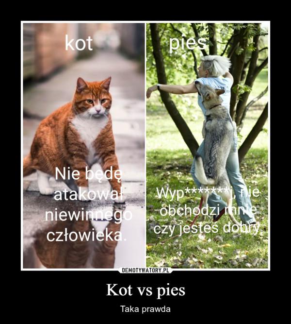 Kot vs pies – Taka prawda