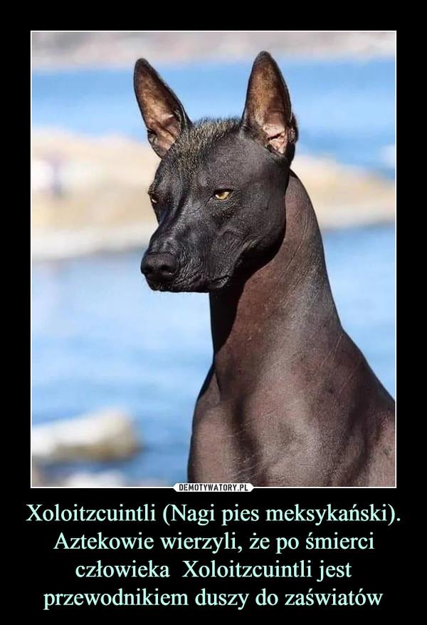 Xoloitzcuintli (Nagi pies meksykański).Aztekowie wierzyli, że po śmierci człowieka  Xoloitzcuintli jest przewodnikiem duszy do zaświatów –