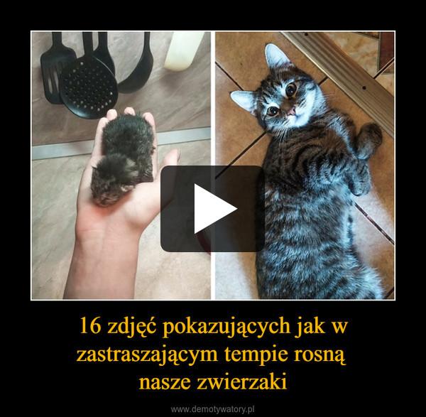 16 zdjęć pokazujących jak w zastraszającym tempie rosną nasze zwierzaki –