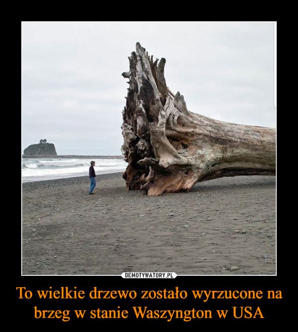 To wielkie drzewo zostało wyrzucone na brzeg w stanie Waszyngton w USA –