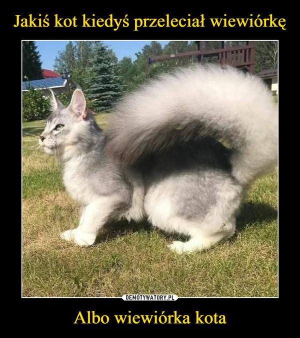 Albo wiewiórka kota –