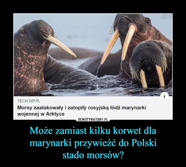 Może zamiast kilku korwet dla marynarki przywieźć do Polskistado morsów? –  Morsy zaatakowały i zatopiły rosyjską łódź marynarkiwojennej w Arktyce
