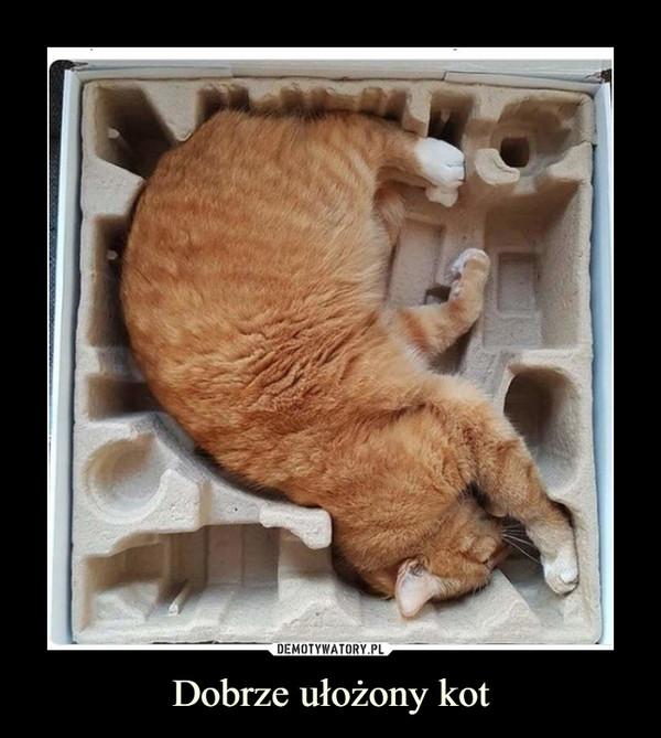 Dobrze ułożony kot –