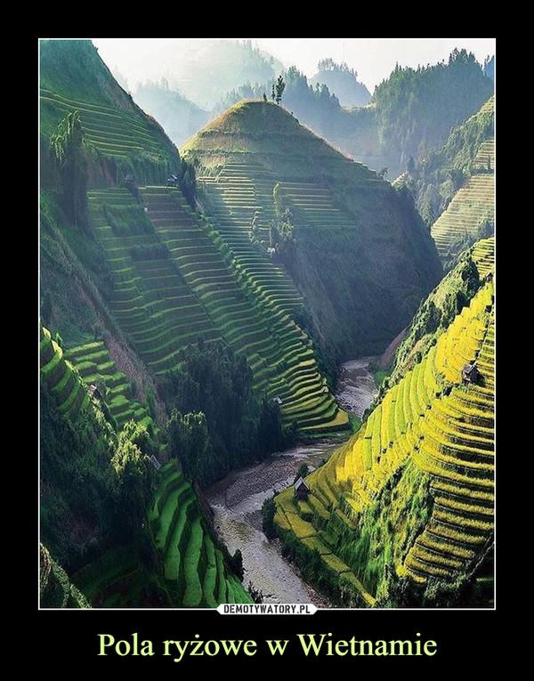 Pola ryżowe w Wietnamie –