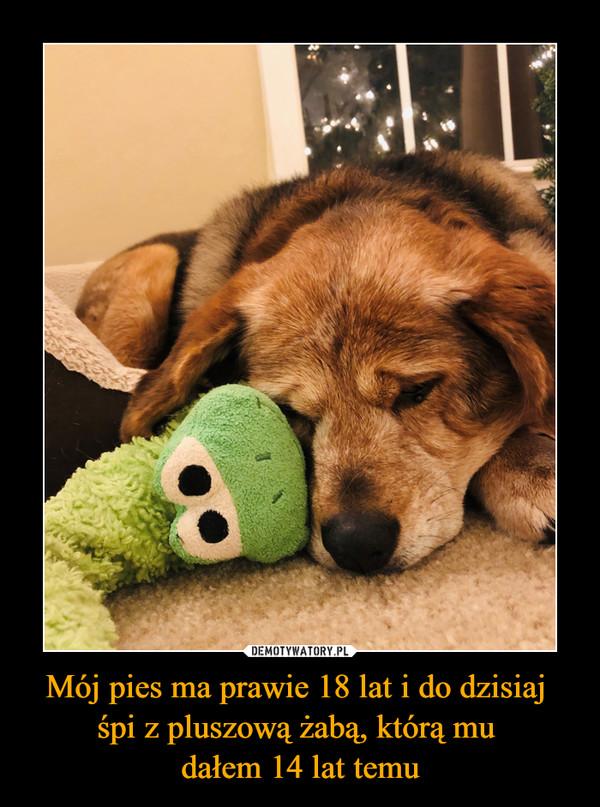 Mój pies ma prawie 18 lat i do dzisiaj śpi z pluszową żabą, którą mu dałem 14 lat temu –