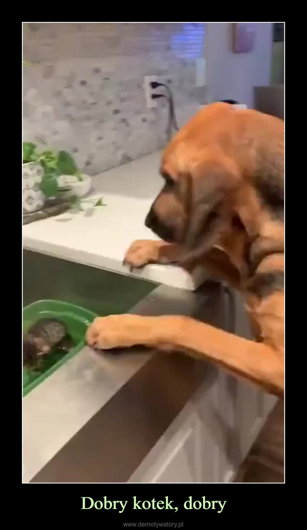 Dobry kotek, dobry –