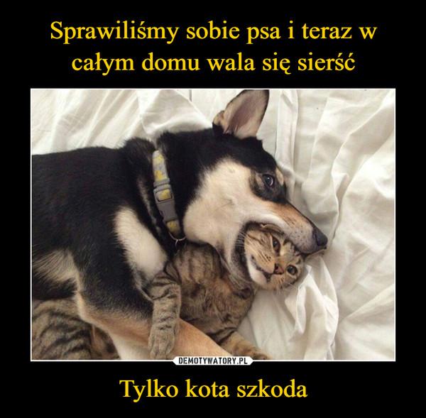 Tylko kota szkoda –