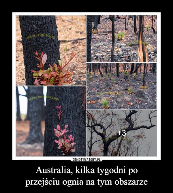 Australia, kilka tygodni poprzejściu ognia na tym obszarze –