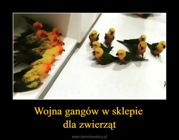 Wojna gangów w sklepie dla zwierząt –