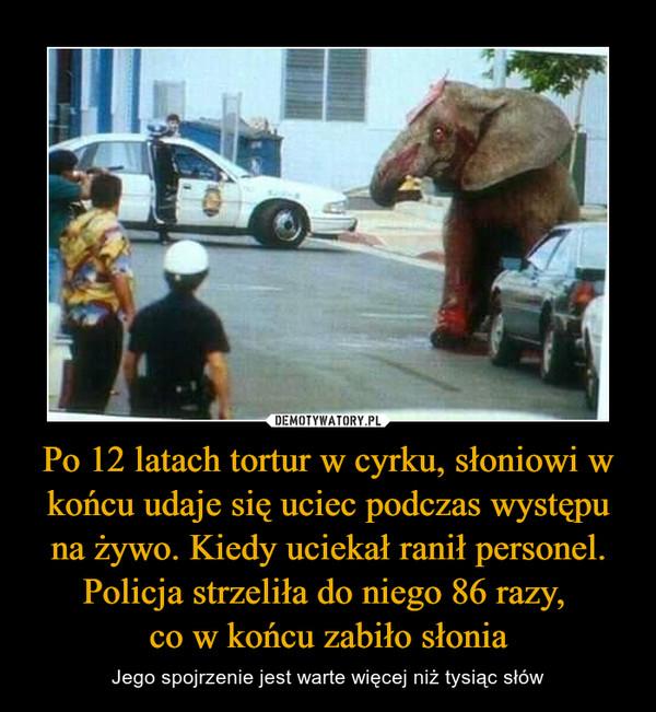 Po 12 latach tortur w cyrku, słoniowi w końcu udaje się uciec podczas występu na żywo. Kiedy uciekał ranił personel. Policja strzeliła do niego 86 razy, co w końcu zabiło słonia – Jego spojrzenie jest warte więcej niż tysiąc słów