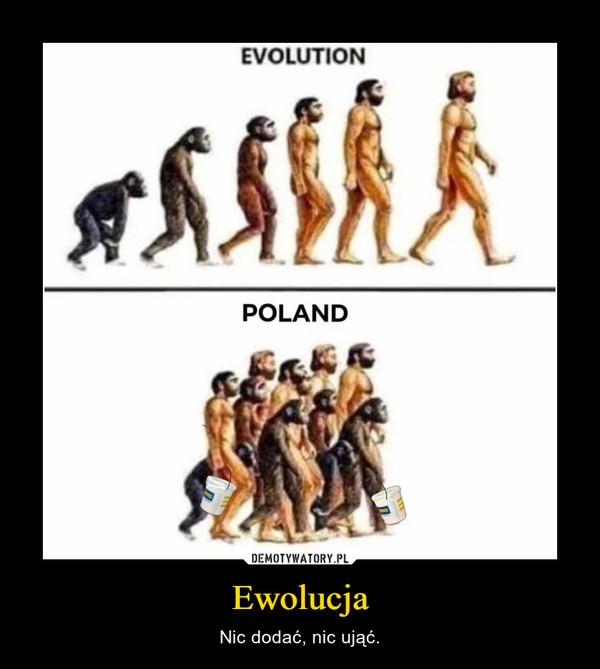 Ewolucja – Nic dodać, nic ująć.