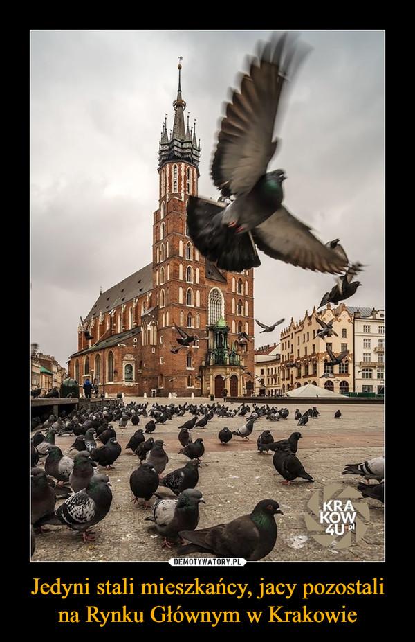 Jedyni stali mieszkańcy, jacy pozostali na Rynku Głównym w Krakowie –