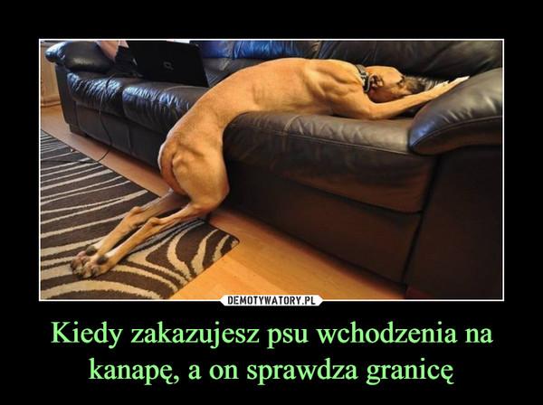 Kiedy zakazujesz psu wchodzenia na kanapę, a on sprawdza granicę –