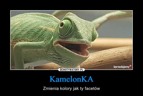 KamelonKA – Zmienia kolory jak ty facetów