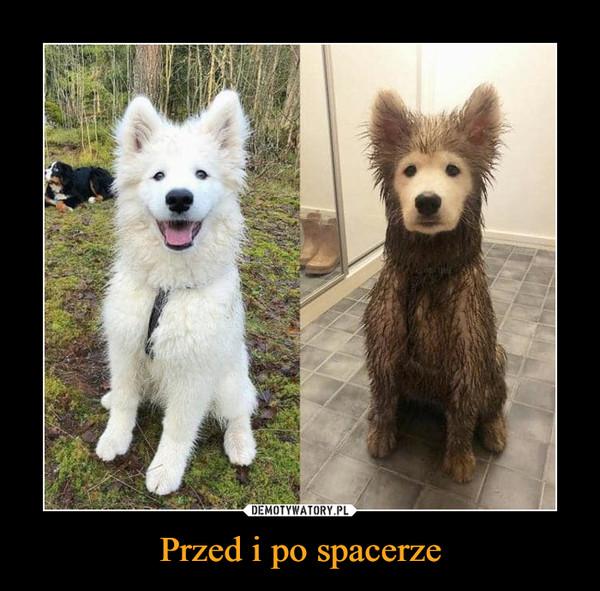 Przed i po spacerze –