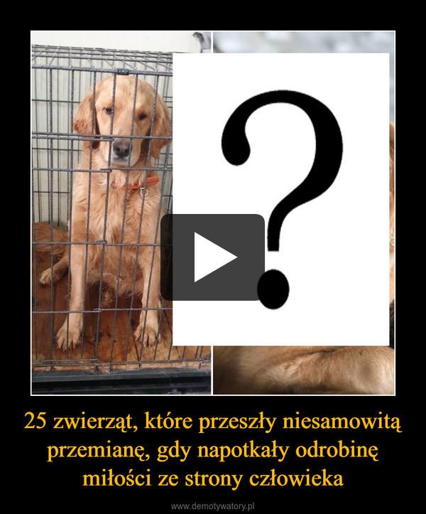 25 zwierząt, które przeszły niesamowitą przemianę, gdy napotkały odrobinę miłości ze strony człowieka –
