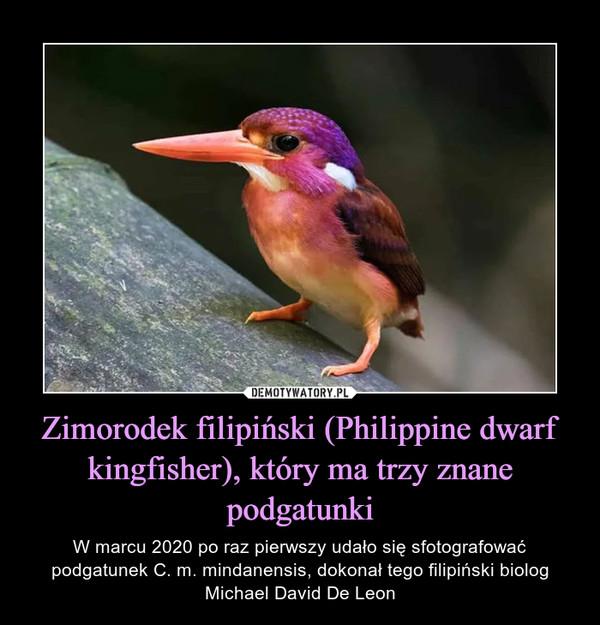 Zimorodek filipiński (Philippine dwarf kingfisher), który ma trzy znane podgatunki – W marcu 2020 po raz pierwszy udało się sfotografować podgatunek C. m. mindanensis, dokonał tego filipiński biolog Michael David De Leon