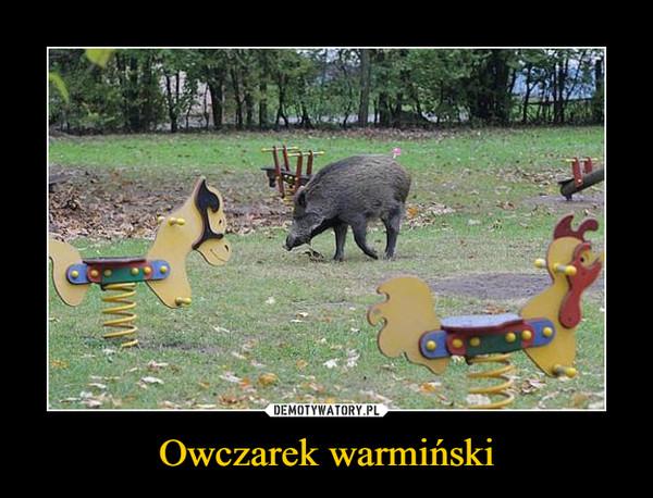 Owczarek warmiński –