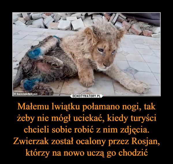 Małemu lwiątku połamano nogi, tak żeby nie mógł uciekać, kiedy turyści chcieli sobie robić z nim zdjęcia. Zwierzak został ocalony przez Rosjan, którzy na nowo uczą go chodzić –