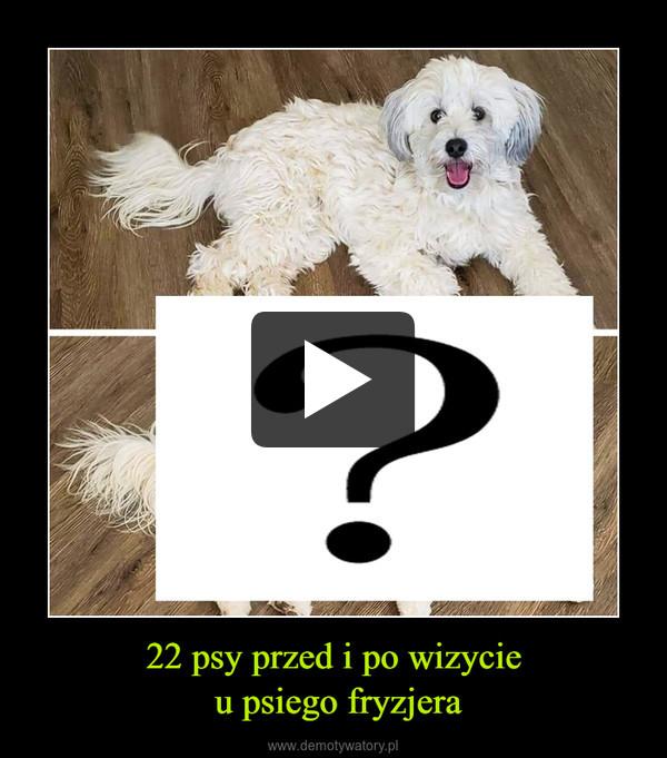 22 psy przed i po wizycie u psiego fryzjera –