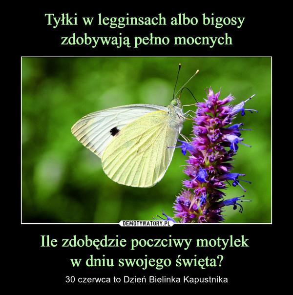 Ile zdobędzie poczciwy motylek w dniu swojego święta? – 30 czerwca to Dzień Bielinka Kapustnika