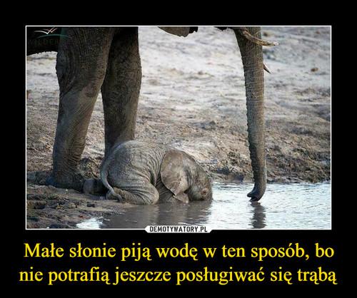Małe słonie piją wodę w ten sposób, bo nie potrafią jeszcze posługiwać się trąbą