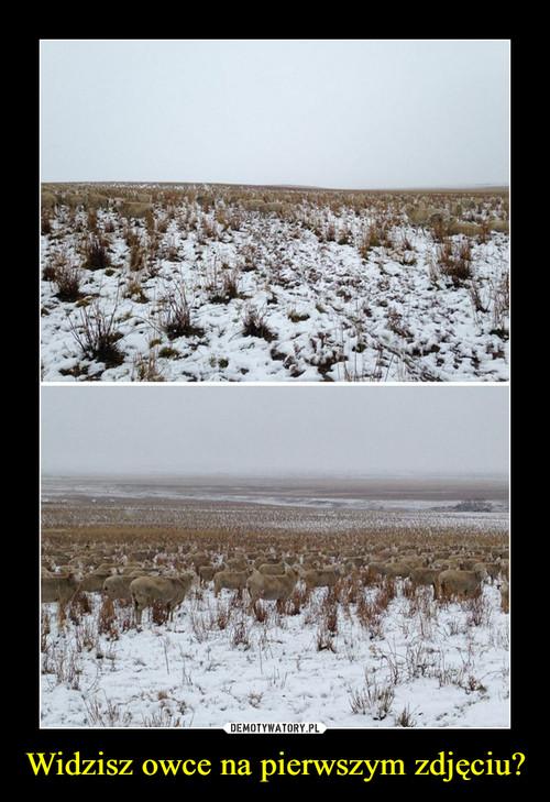 Widzisz owce na pierwszym zdjęciu?