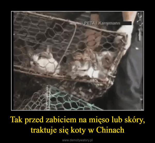 Tak przed zabiciem na mięso lub skóry, traktuje się koty w Chinach –