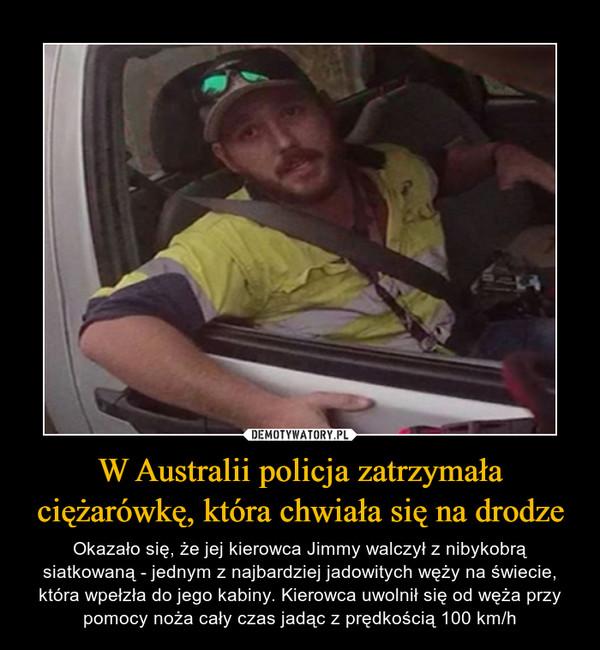 W Australii policja zatrzymała ciężarówkę, która chwiała się na drodze – Okazało się, że jej kierowca Jimmy walczył z nibykobrą siatkowaną - jednym z najbardziej jadowitych węży na świecie, która wpełzła do jego kabiny. Kierowca uwolnił się od węża przy pomocy noża cały czas jadąc z prędkością 100 km/h
