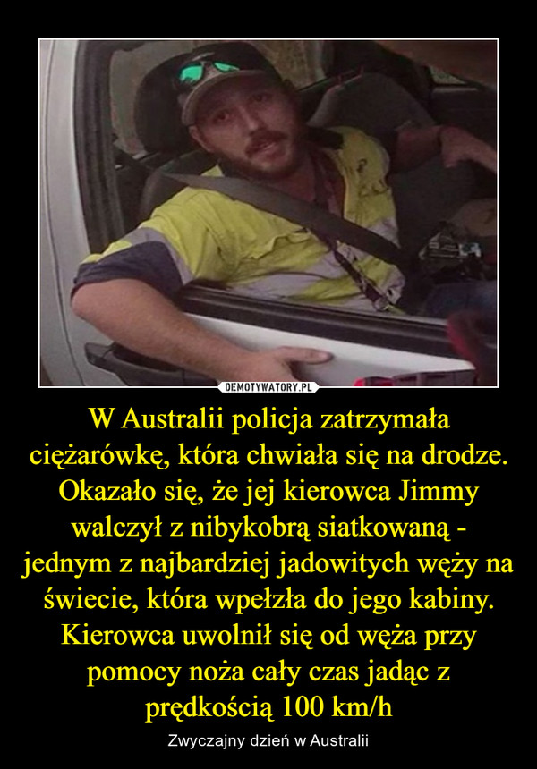 W Australii policja zatrzymała ciężarówkę, która chwiała się na drodze. Okazało się, że jej kierowca Jimmy walczył z nibykobrą siatkowaną - jednym z najbardziej jadowitych węży na świecie, która wpełzła do jego kabiny. Kierowca uwolnił się od węża przy pomocy noża cały czas jadąc z prędkością 100 km/h – Zwyczajny dzień w Australii
