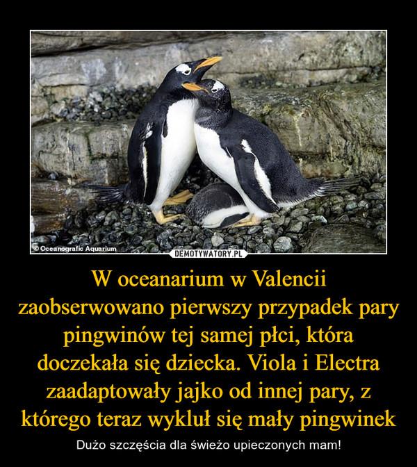 W oceanarium w Valencii zaobserwowano pierwszy przypadek pary pingwinów tej samej płci, która doczekała się dziecka. Viola i Electra zaadaptowały jajko od innej pary, z którego teraz wykluł się mały pingwinek – Dużo szczęścia dla świeżo upieczonych mam!