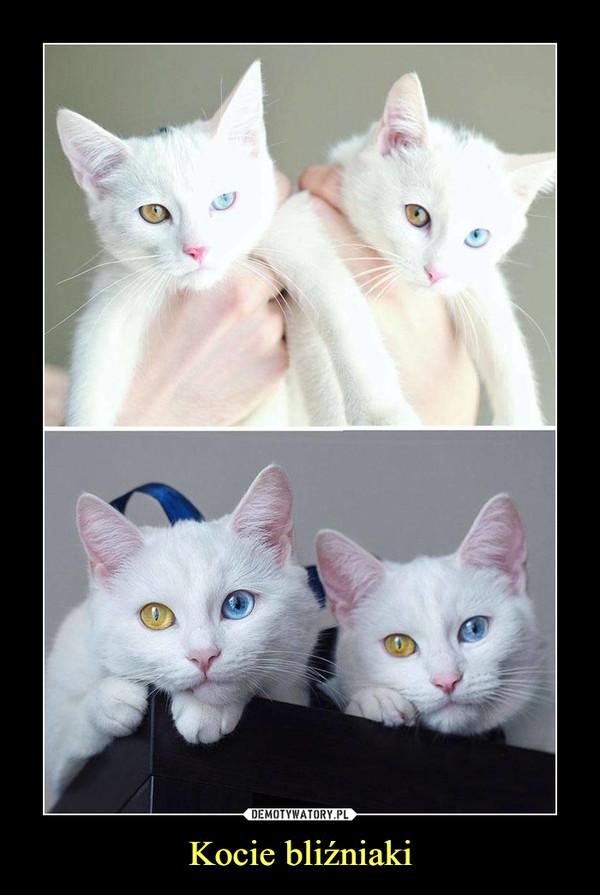 Kocie bliźniaki –