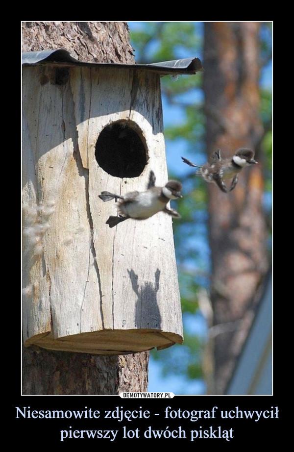 Niesamowite zdjęcie - fotograf uchwycił pierwszy lot dwóch piskląt –