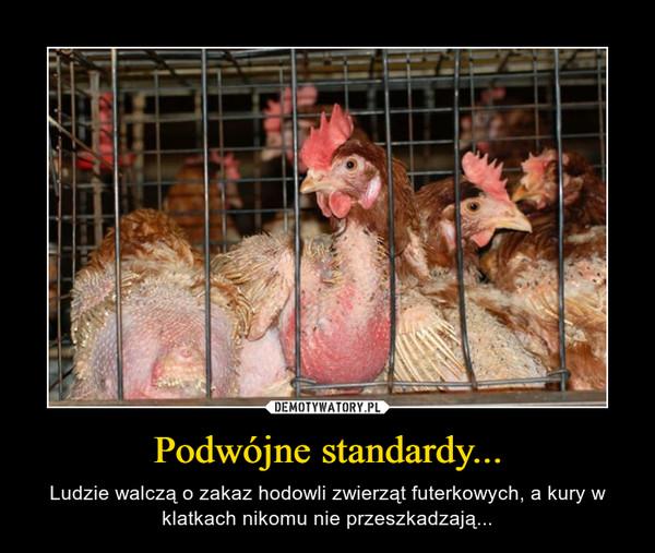Podwójne standardy... – Ludzie walczą o zakaz hodowli zwierząt futerkowych, a kury w klatkach nikomu nie przeszkadzają...