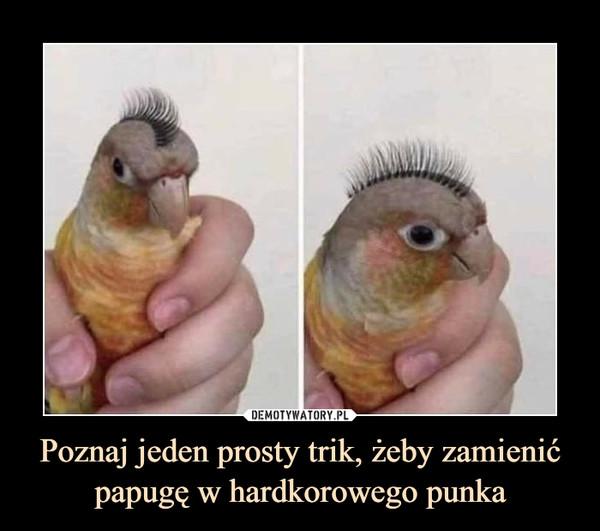 Poznaj jeden prosty trik, żeby zamienić papugę w hardkorowego punka –