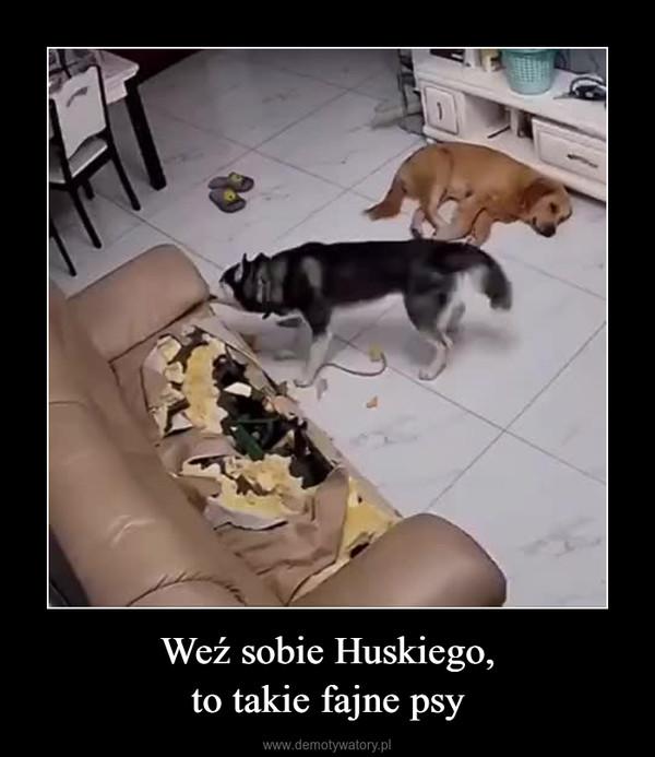 Weź sobie Huskiego,to takie fajne psy –