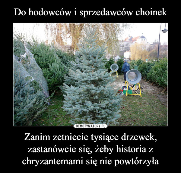Zanim zetniecie tysiące drzewek, zastanówcie się, żeby historia z chryzantemami się nie powtórzyła –