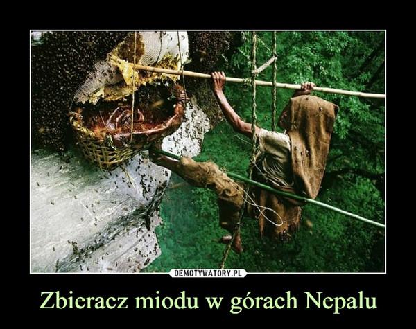 Zbieracz miodu w górach Nepalu –