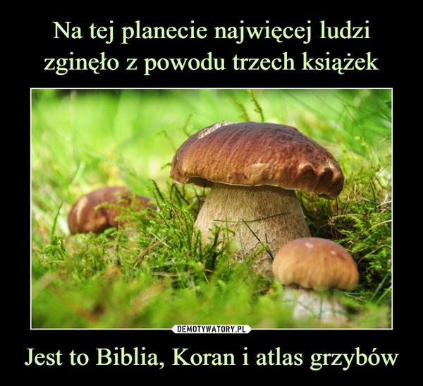 Jest to Biblia, Koran i atlas grzybów –