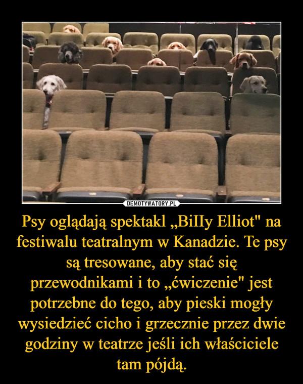 """Psy oglądają spektakl """"BiIIy Elliot"""" na festiwalu teatralnym w Kanadzie. Te psy są tresowane, aby stać się przewodnikami i to """"ćwiczenie"""" jest potrzebne do tego, aby pieski mogły wysiedzieć cicho i grzecznie przez dwie godziny w teatrze jeśli ich właściciele tam pójdą. –"""