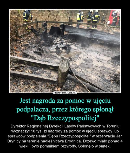 """Jest nagroda za pomoc w ujęciu podpalacza, przez którego spłonął """"Dąb Rzeczypospolitej"""""""