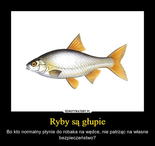 Ryby są głupie