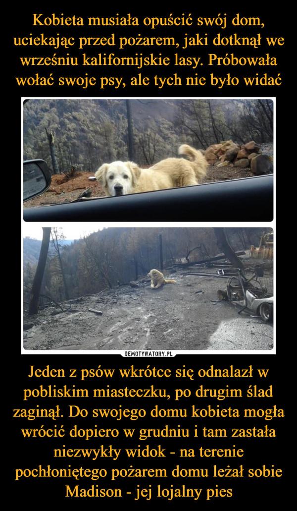 Kobieta musiała opuścić swój dom, uciekając przed pożarem, jaki dotknął we wrześniu kalifornijskie lasy. Próbowała wołać swoje psy, ale tych nie było widać Jeden z psów wkrótce się odnalazł w pobliskim miasteczku, po drugim ślad zaginął. Do swojego domu kobieta mogła wrócić dopiero w grudniu i tam zastała niezwykły widok - na terenie pochłoniętego pożarem domu leżał sobie Madison - jej lojalny pies
