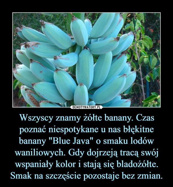 """Wszyscy znamy żółte banany. Czas poznać niespotykane u nas błękitne banany """"Blue Java"""" o smaku lodów waniliowych. Gdy dojrzeją tracą swój wspaniały kolor i stają się bladożółte. Smak na szczęście pozostaje bez zmian. –"""