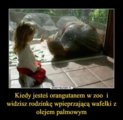 Kiedy jesteś orangutanem w zoo  i widzisz rodzinkę wpieprzającą wafelki z olejem palmowym
