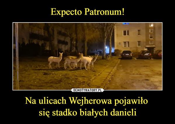 Na ulicach Wejherowa pojawiło się stadko białych danieli –