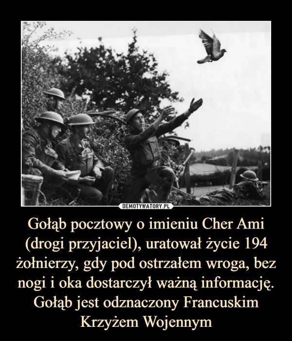 Gołąb pocztowy o imieniu Cher Ami (drogi przyjaciel), uratował życie 194 żołnierzy, gdy pod ostrzałem wroga, bez nogi i oka dostarczył ważną informację. Gołąb jest odznaczony Francuskim Krzyżem Wojennym –