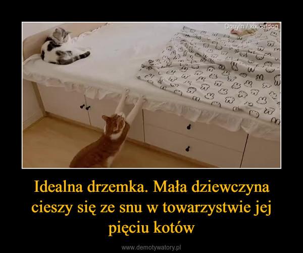 Idealna drzemka. Mała dziewczyna cieszy się ze snu w towarzystwie jej pięciu kotów –