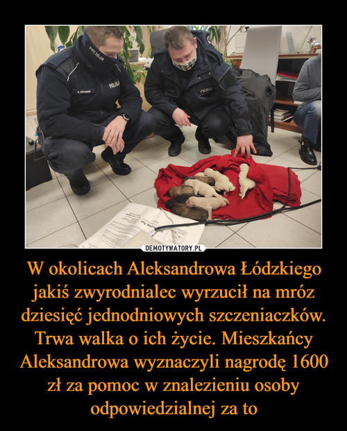 W okolicach Aleksandrowa Łódzkiego jakiś zwyrodnialec wyrzucił na mróz dziesięć jednodniowych szczeniaczków. Trwa walka o ich życie. Mieszkańcy Aleksandrowa wyznaczyli nagrodę 1600 zł za pomoc w znalezieniu osoby odpowiedzialnej za to